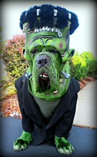 20 Cool Pet Costumes for Halloween - Hative