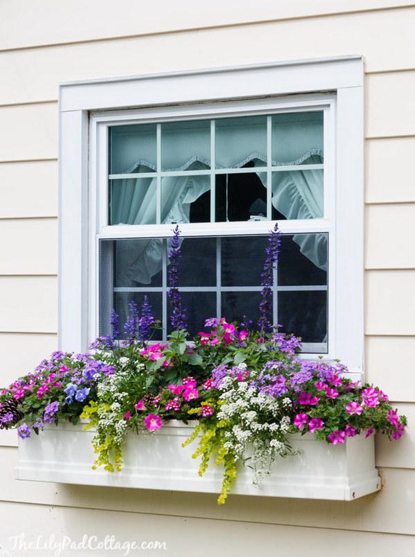 25 Creative Window Boxes