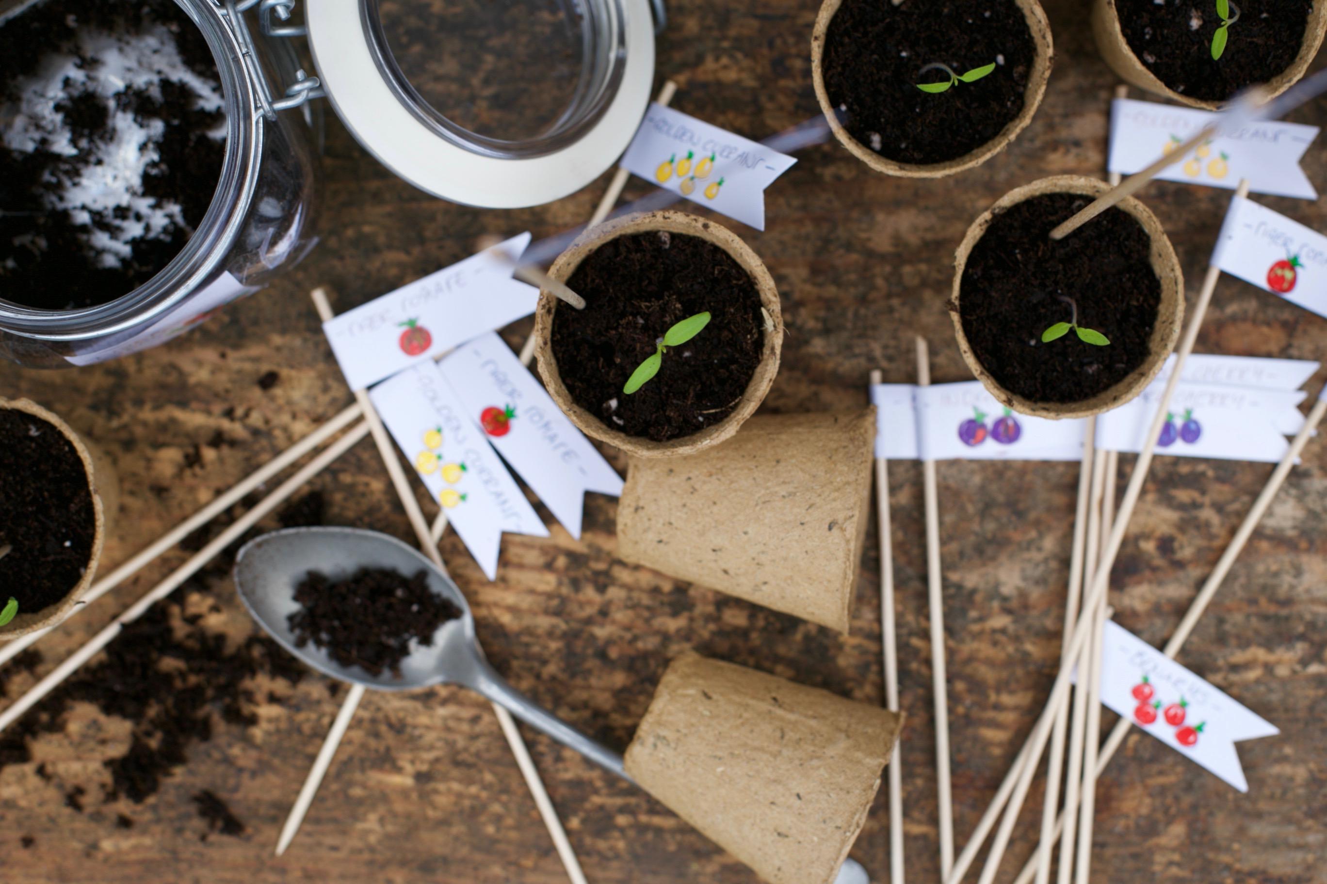 tomaten selber ziehen garten schule. Black Bedroom Furniture Sets. Home Design Ideas