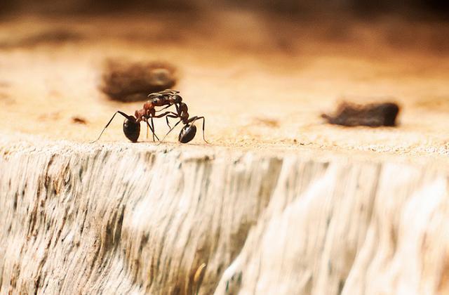 Was Tun Gegen Ameisen In Der Kueche