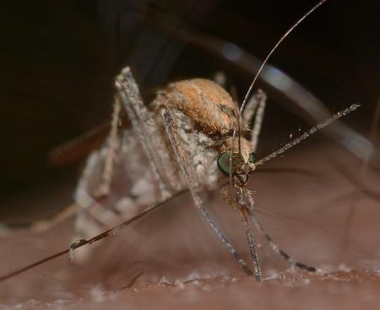 Was Hilft Gegen Mücken In Der Wohnung