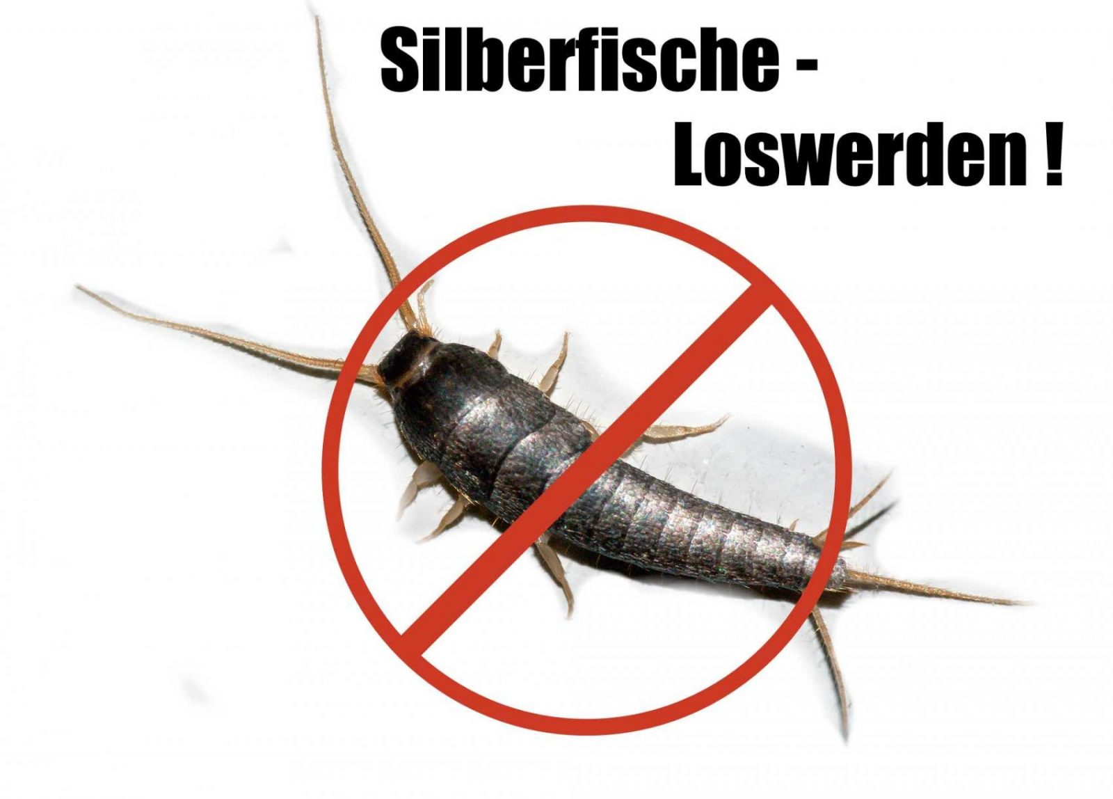 Beaufiful Silberfische Schlafzimmer Photos >> Silberfische Loswerden ...
