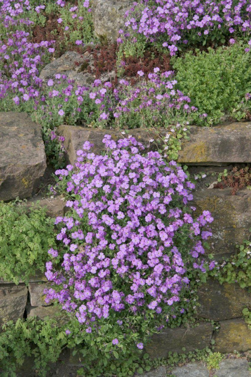 Pflanzen sonniger standort winterhart cool pflanzen for Kubel bepflanzen winterhart