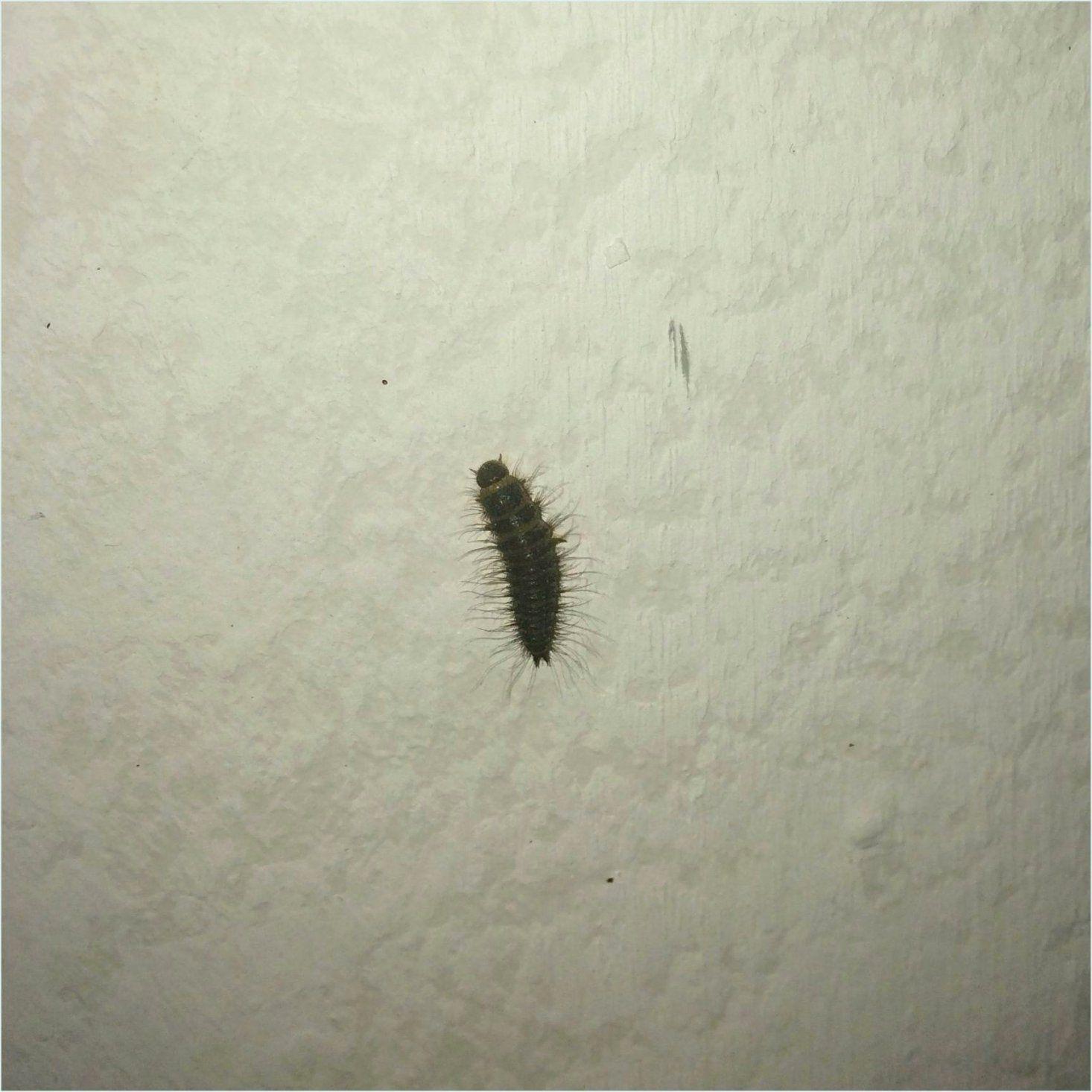 Kleine Braune Würmer In Der Küche   Motten Und Larven In Der Küche