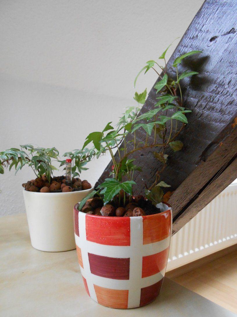 Luftreinigende Pflanzen Schlafzimmer