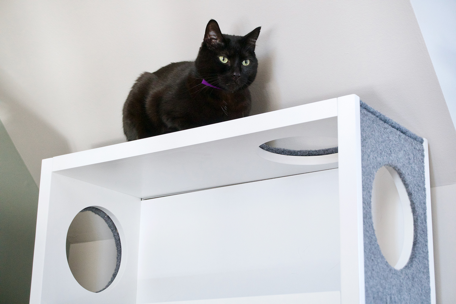 Modern Cat Shelves Test The Purrshelf Modern Cat Shelf At A Deep Discount