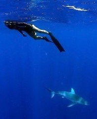 SWIM WITH SHARKS HAWAII ADVENTURE DIVING