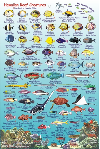 Hawaiian Fish Chart hawai 'i reef creatures guide ( fish card)