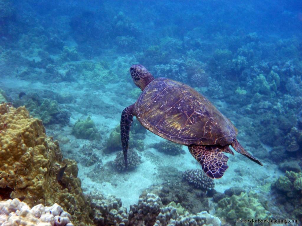 Permalink to Snorkeling in Hawaii