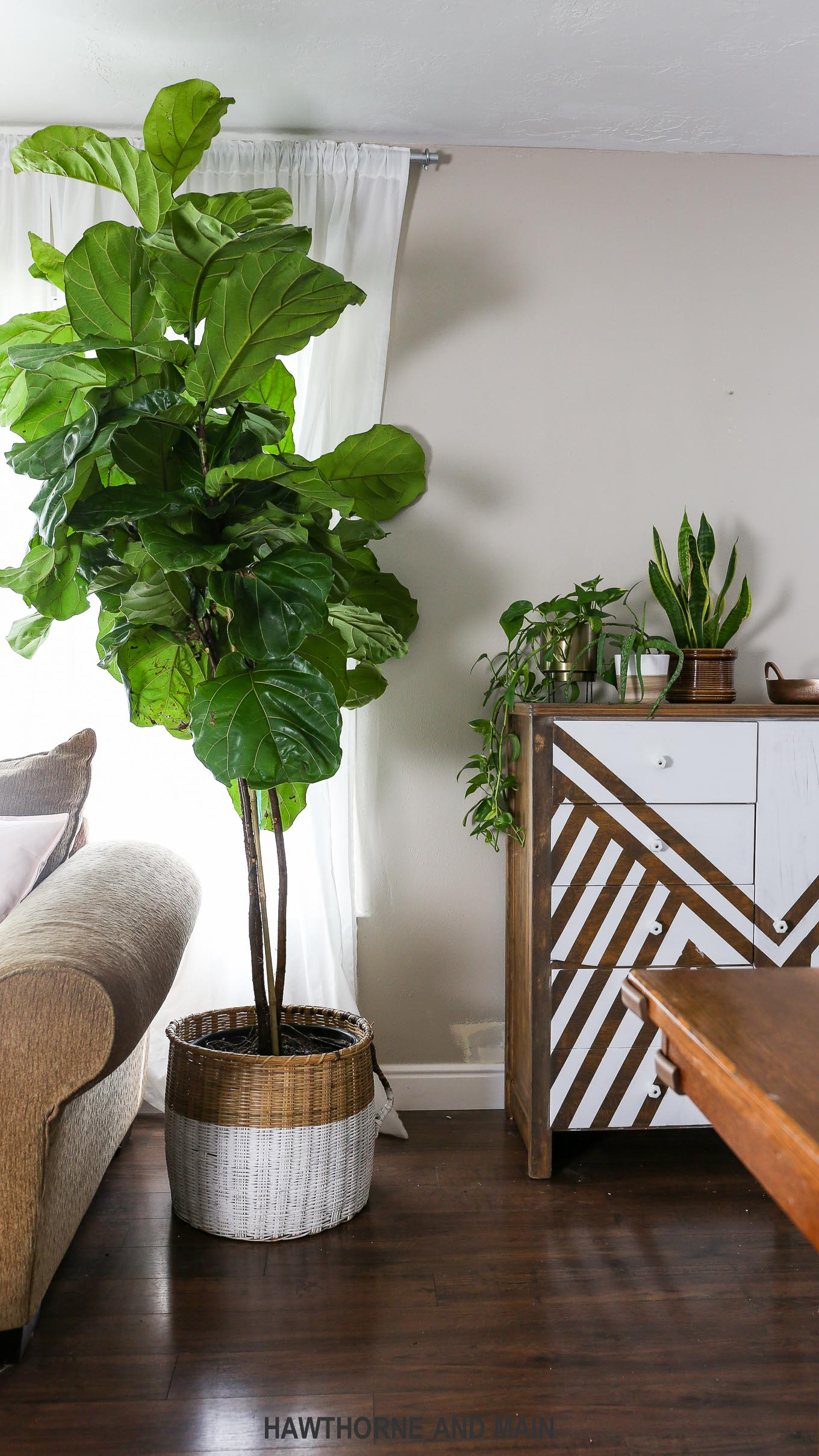 Fiddle Leaf Fig Tree How To Care For A Fiddle Leaf Fig Tree Hawthorne And Main
