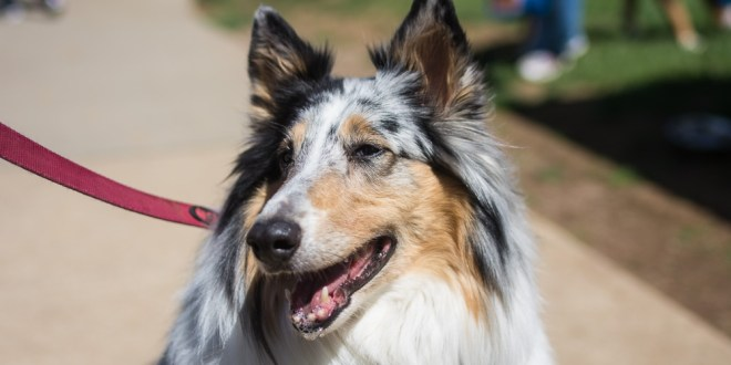 dogwalk-2016- (126 of 164)HRez