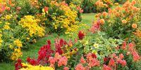 25 Best Fall Flowers & Plants - Flowers That Bloom in Autumn
