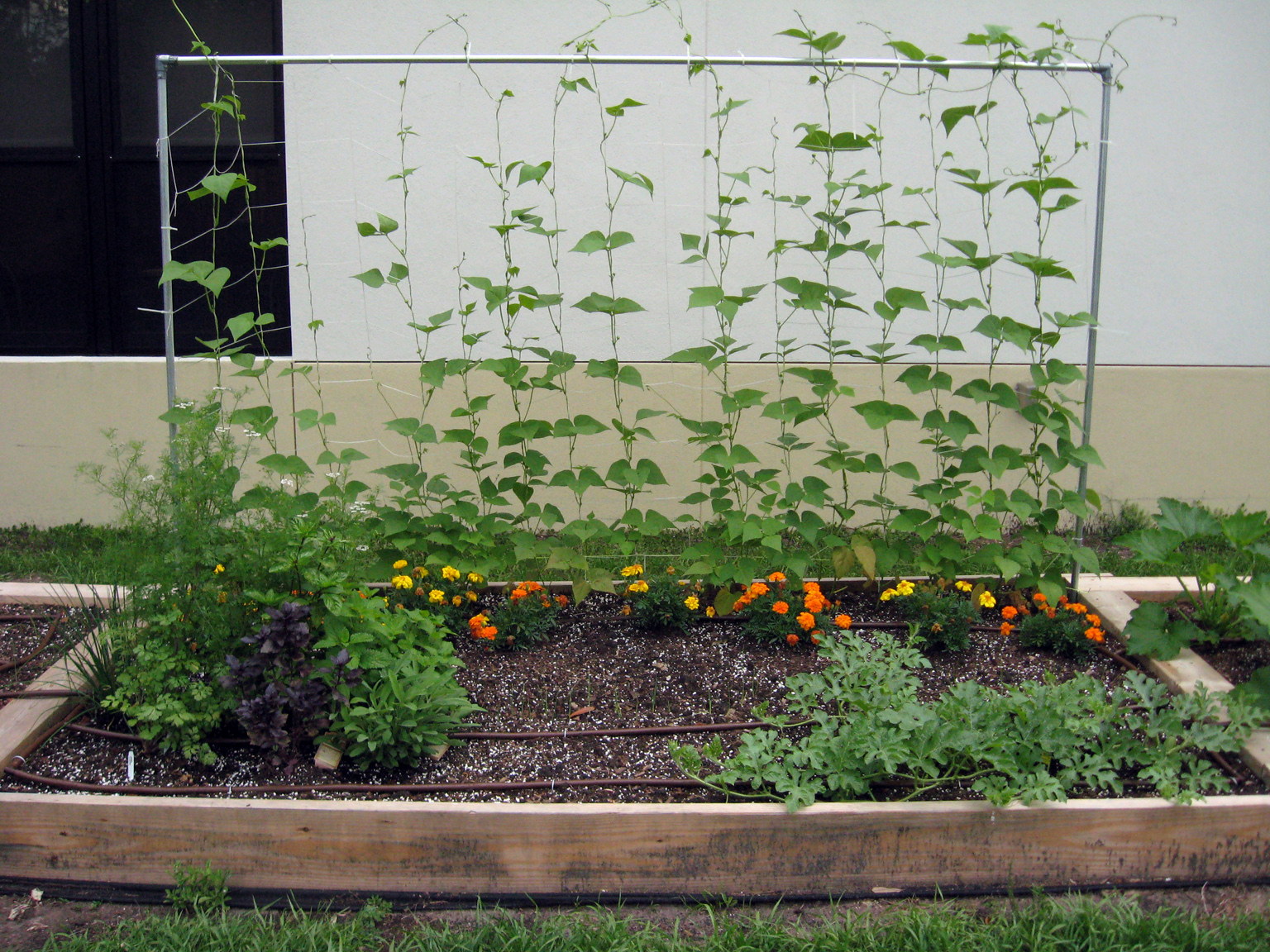 Plant Bed Raised Beds Hillsborough Extension Garden Blog