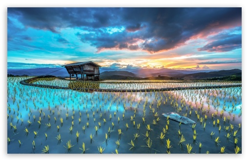 How To Download Wallpaper For Iphone 6 Asia Plantation Of Rice 4k Hd Desktop Wallpaper For 4k