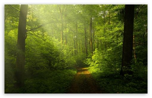 Fall Wallpaper 1440p Beautiful Nature Image Green Forest 4k Hd Desktop