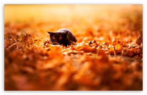Free Fall Cat Wallpaper Black Cat 4k Hd Desktop Wallpaper For 4k Ultra Hd Tv