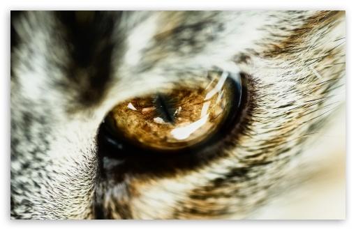 Apple Clownfish Wallpaper Iphone X Cat Eye Close Up 4k Hd Desktop Wallpaper For 4k Ultra Hd