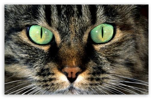 Black Cat Eyes Wallpaper Cat With Green Eyes 4k Hd Desktop Wallpaper For 4k Ultra