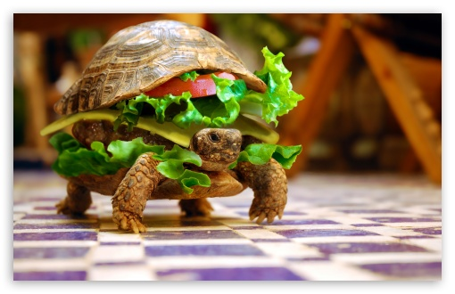 Cute Wallpaper For Ipod Touch 5 Cheese Turtle Burger By K23 4k Hd Desktop Wallpaper For 4k