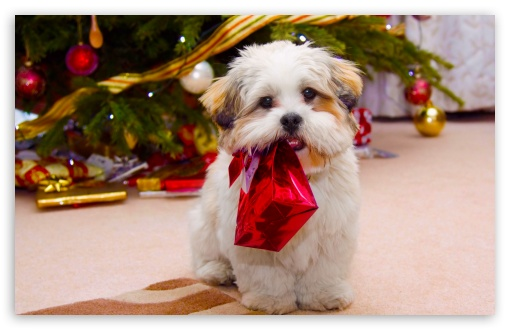 Cute Dogs And Puppies Wallpaper For Mobile Cute Dog Christmas 4k Hd Desktop Wallpaper For 4k Ultra Hd