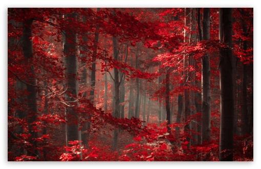 3d Magic Eye Moving Wallpapers Enchanted Forest 4k Hd Desktop Wallpaper For 4k Ultra Hd