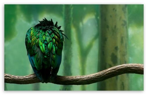 So Sad Girl Wallpaper Green Bird 4k Hd Desktop Wallpaper For 4k Ultra Hd Tv