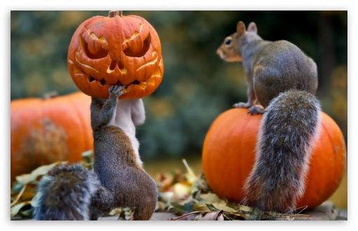 Puppies And Fall Wallpaper Halloween Squirrels 4k Hd Desktop Wallpaper For 4k Ultra