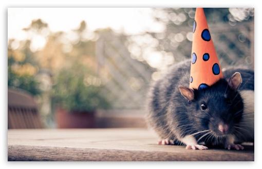 Happy Birthday 1080p Hd Wallpapers Happy Birthday Mouse 4k Hd Desktop Wallpaper For 4k Ultra