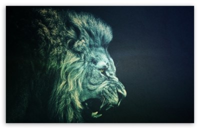 LION 4K HD Desktop Wallpaper for 4K Ultra HD TV • Wide & Ultra Widescreen Displays • Tablet ...