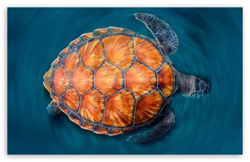 Sea Turtle Iphone Wallpaper Sea Turtle 4k Hd Desktop Wallpaper For 4k Ultra Hd Tv