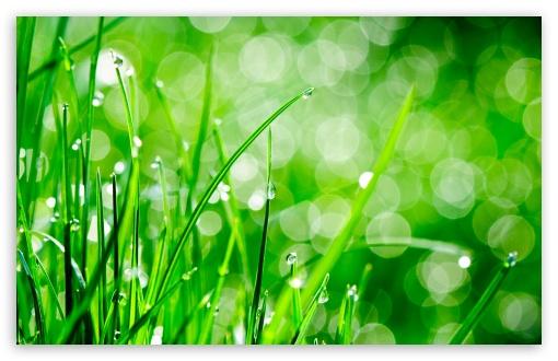 3d Hd Wallpapers 1366x768 Water Drops On Grass 4k Hd Desktop Wallpaper For 4k Ultra