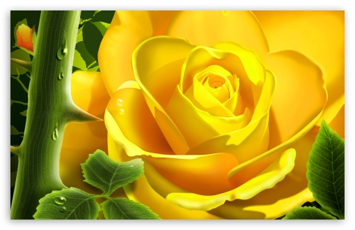 Animated Hd Wallpapers 1080p Free Download Yellow Rose Illustration 4k Hd Desktop Wallpaper For 4k