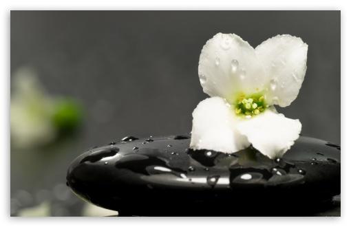 Iphone X 3d Touch Wallpaper Zen Stones And Flower 4k Hd Desktop Wallpaper For 4k Ultra