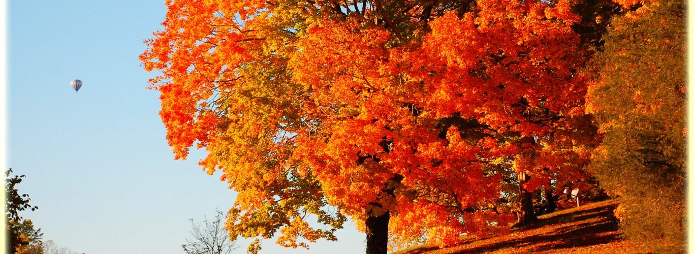 Fall Wood Wallpaper Fall Wallpapers Cool Hd Desktop Wallpapers 4k Hd