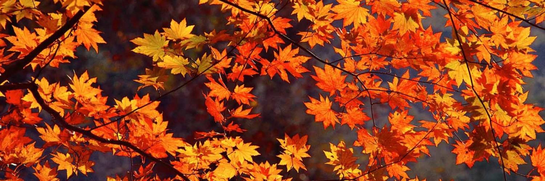 Autumn Leaves 3d Live Wallpaper Fall Wallpapers Orange Leaves Hd Desktop Wallpapers 4k Hd