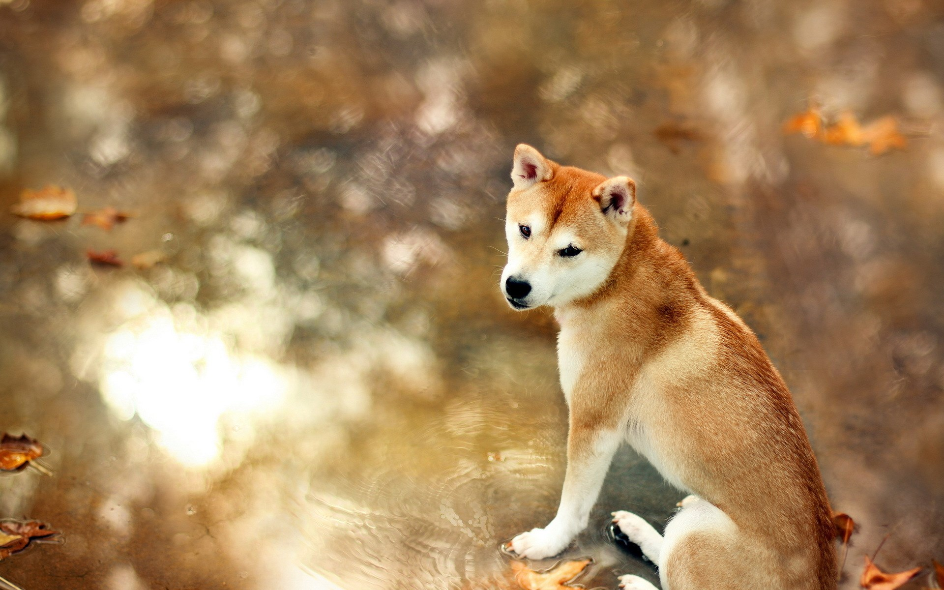 Cute Photography Wallpaper Dog Wallpapers Archives Page 7 Of 9 Hd Desktop