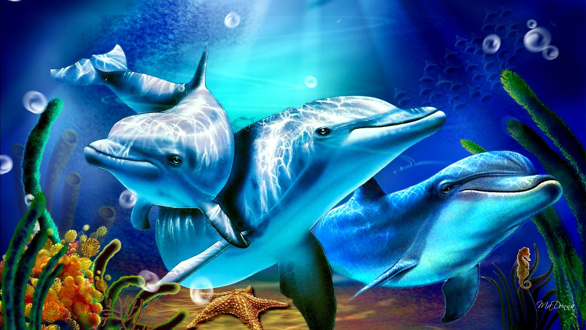 Cute Dolphin Wallpapers Dolphin Wallpaper Image Hd Desktop Wallpapers 4k Hd