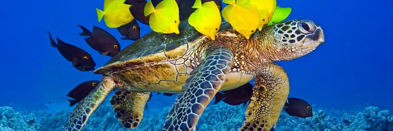 3d Fish Hd Live Wallpaper Fish Wallpaper Turtle Hd Desktop Wallpapers 4k Hd