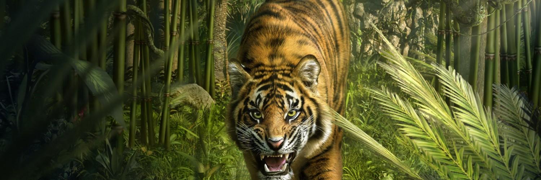 3d Dragon Wallpapers For Desktop Picture Of A Tiger Hd Desktop Wallpapers 4k Hd