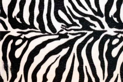 Cool Zebra Prints