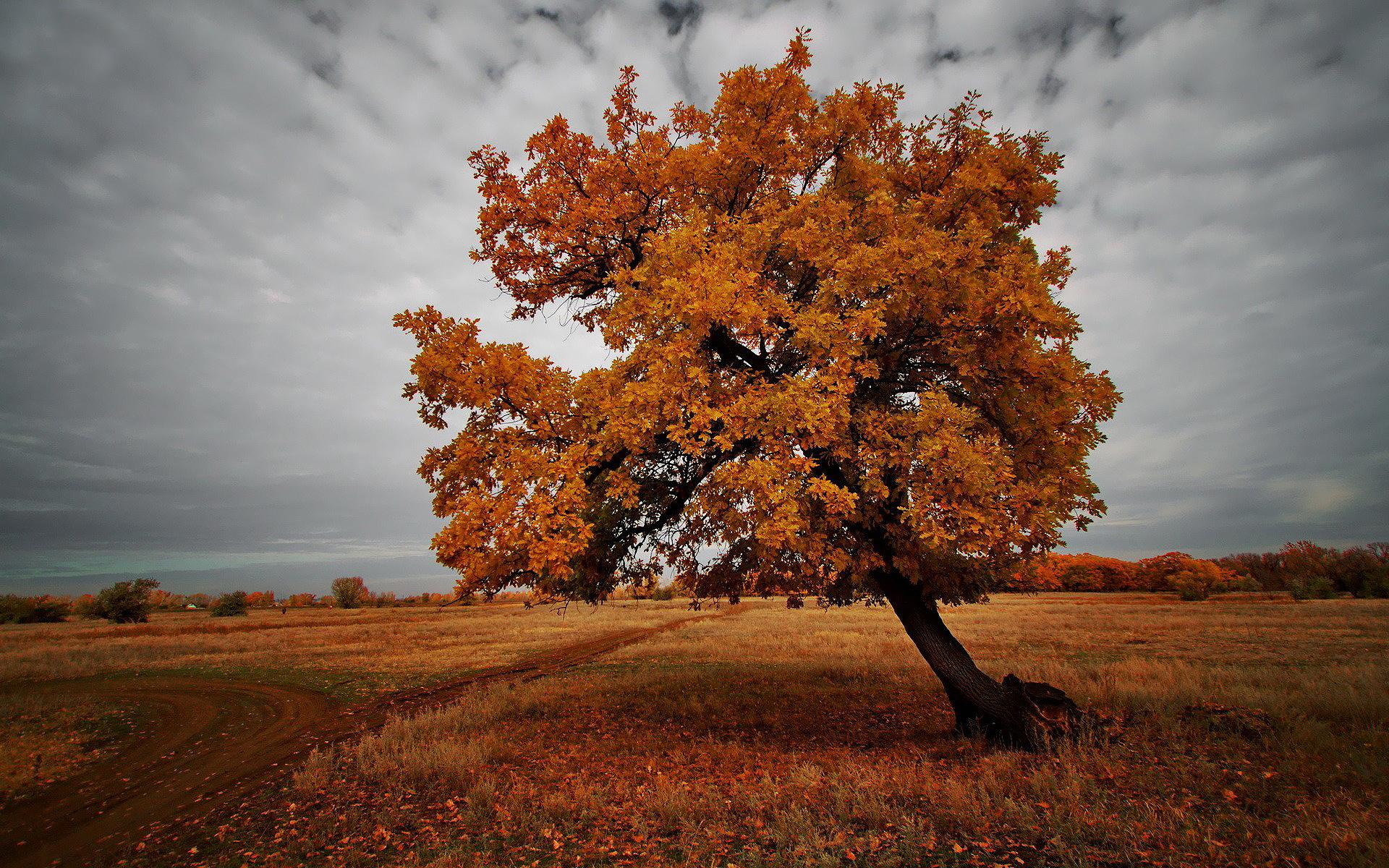 Autumn Leaves 3d Live Wallpaper Autumn Brown Landscape Hd Desktop Wallpapers 4k Hd