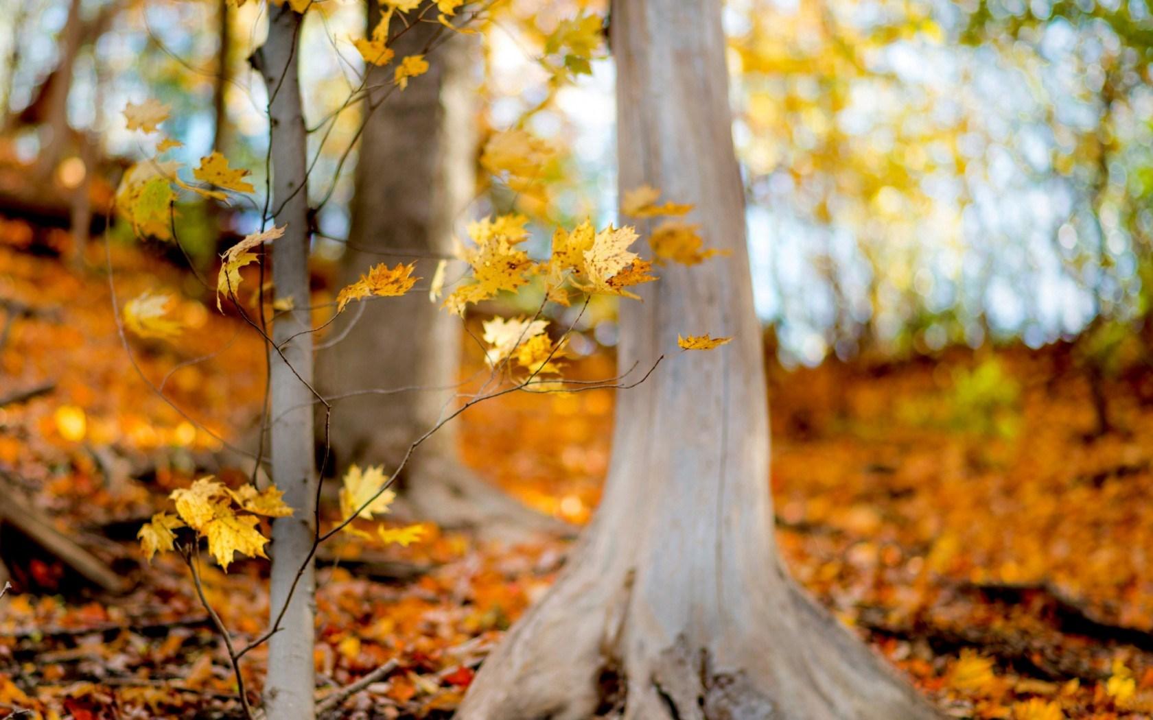 Name Live Wallpaper 3d Autumn Fall Trees Forest Hd Desktop Wallpapers 4k Hd
