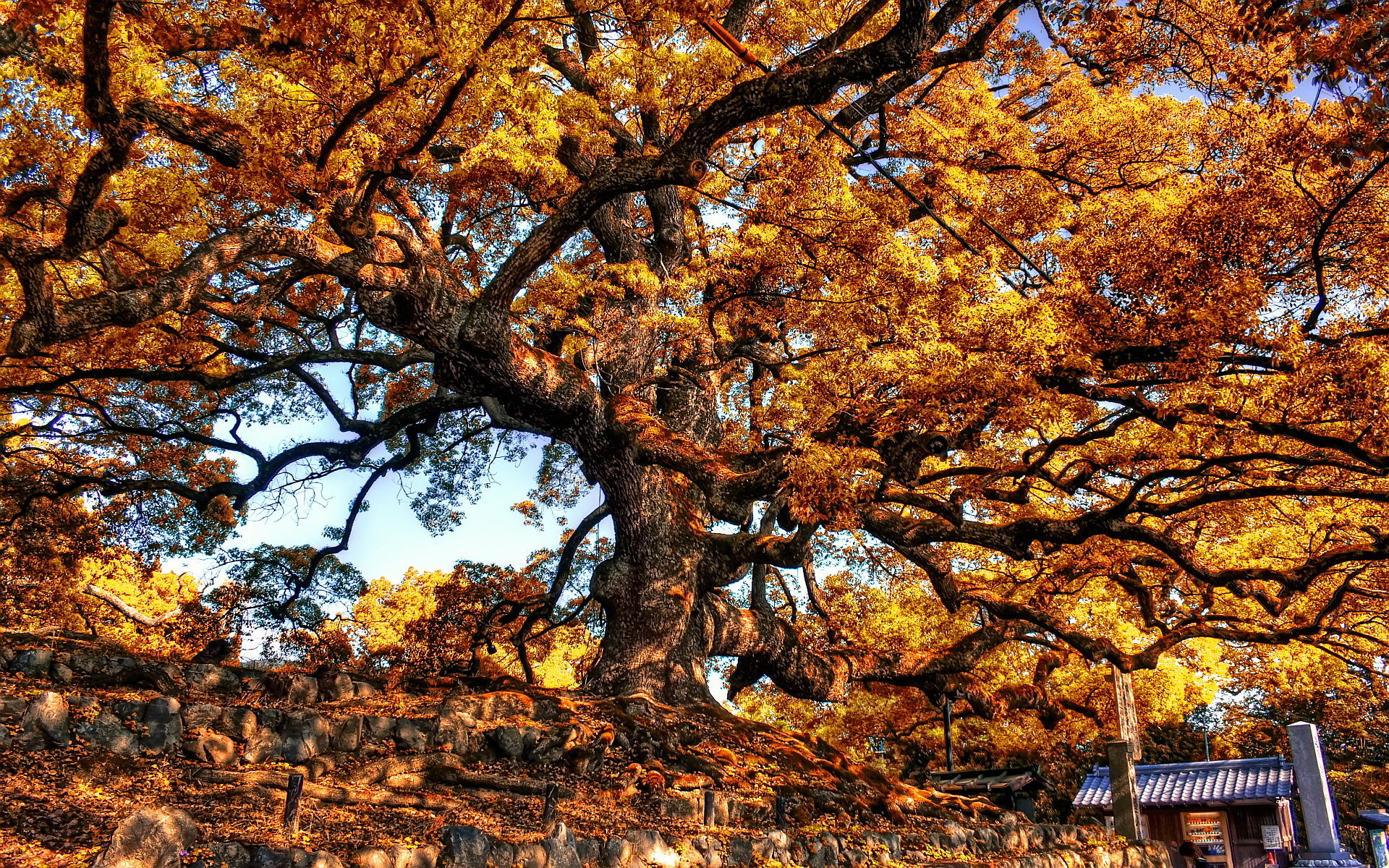 Autumn Leaves 3d Live Wallpaper Autumn Images Desktop Hd Desktop Wallpapers 4k Hd