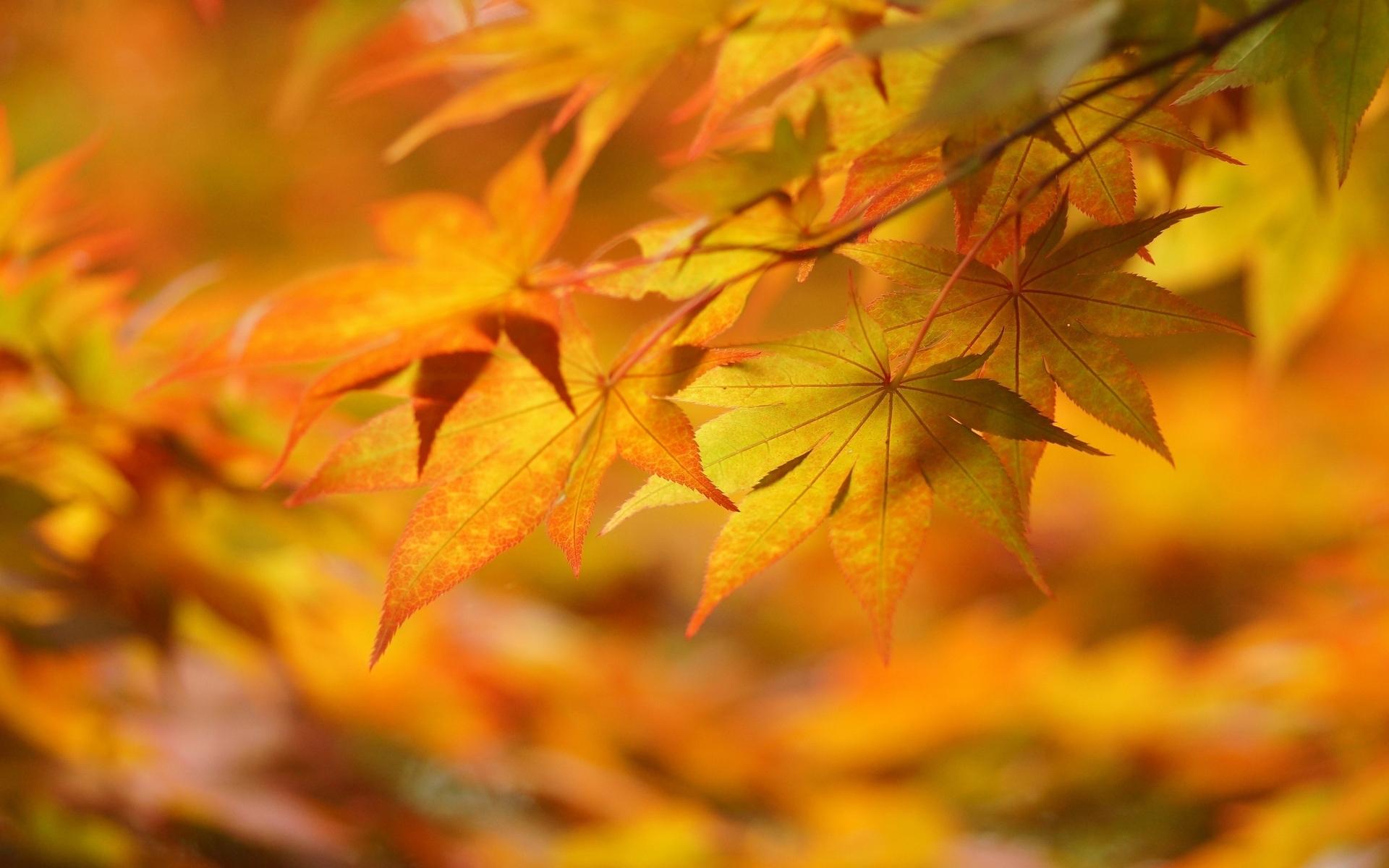 Autumn Leaves 3d Live Wallpaper Autumn Leaves Hd Hd Desktop Wallpapers 4k Hd