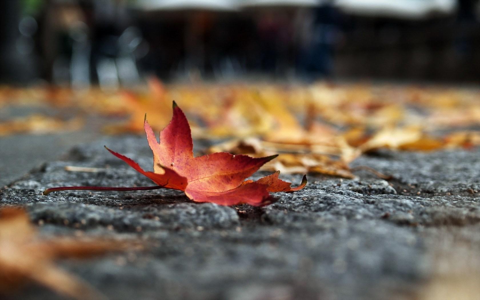 Autumn Leaves 3d Live Wallpaper Autumn Leaves Very Beautiful Hd Desktop Wallpapers 4k Hd
