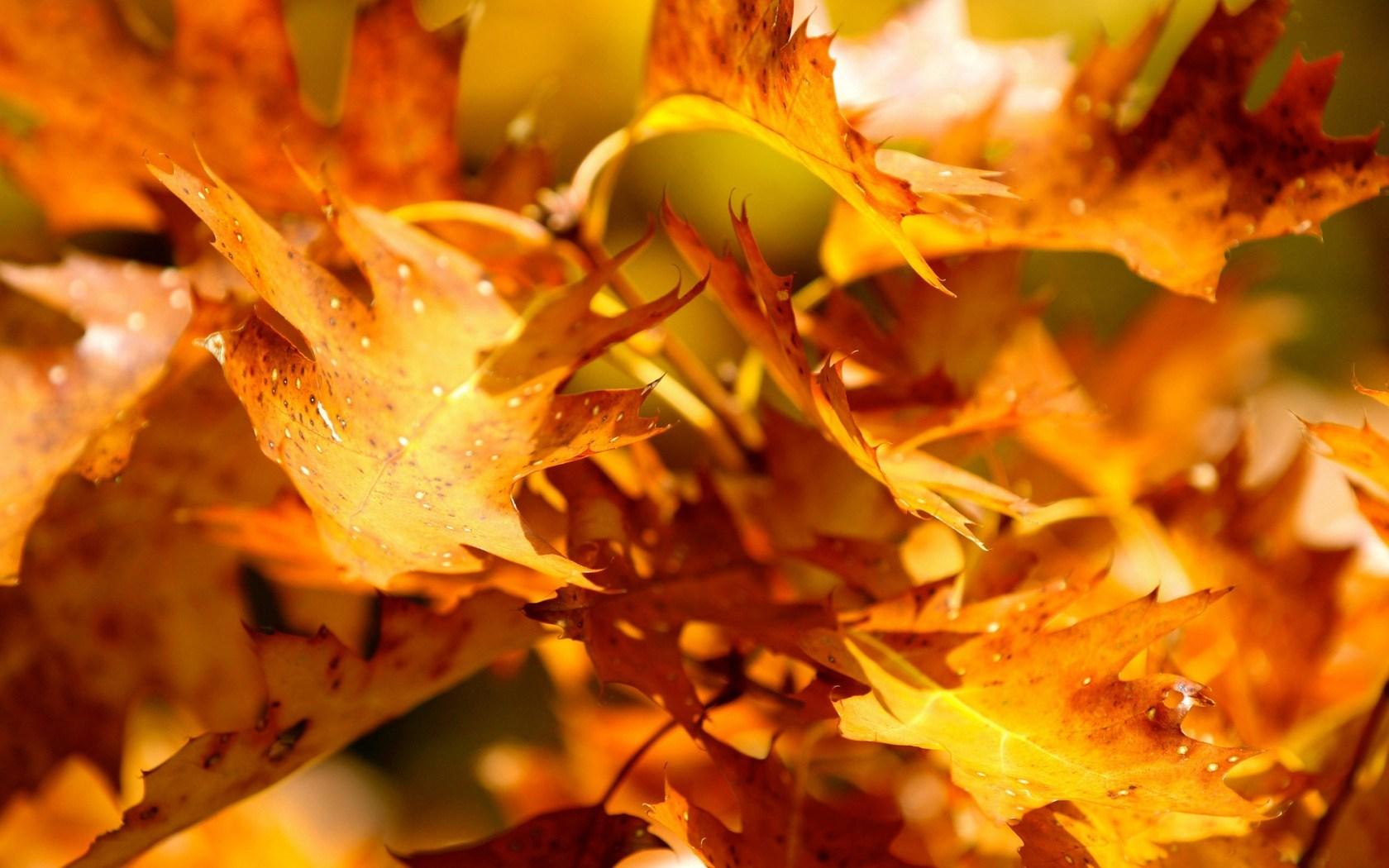 Autumn Leaves 3d Live Wallpaper Autumn Yellow Leaves Hd Desktop Wallpapers 4k Hd