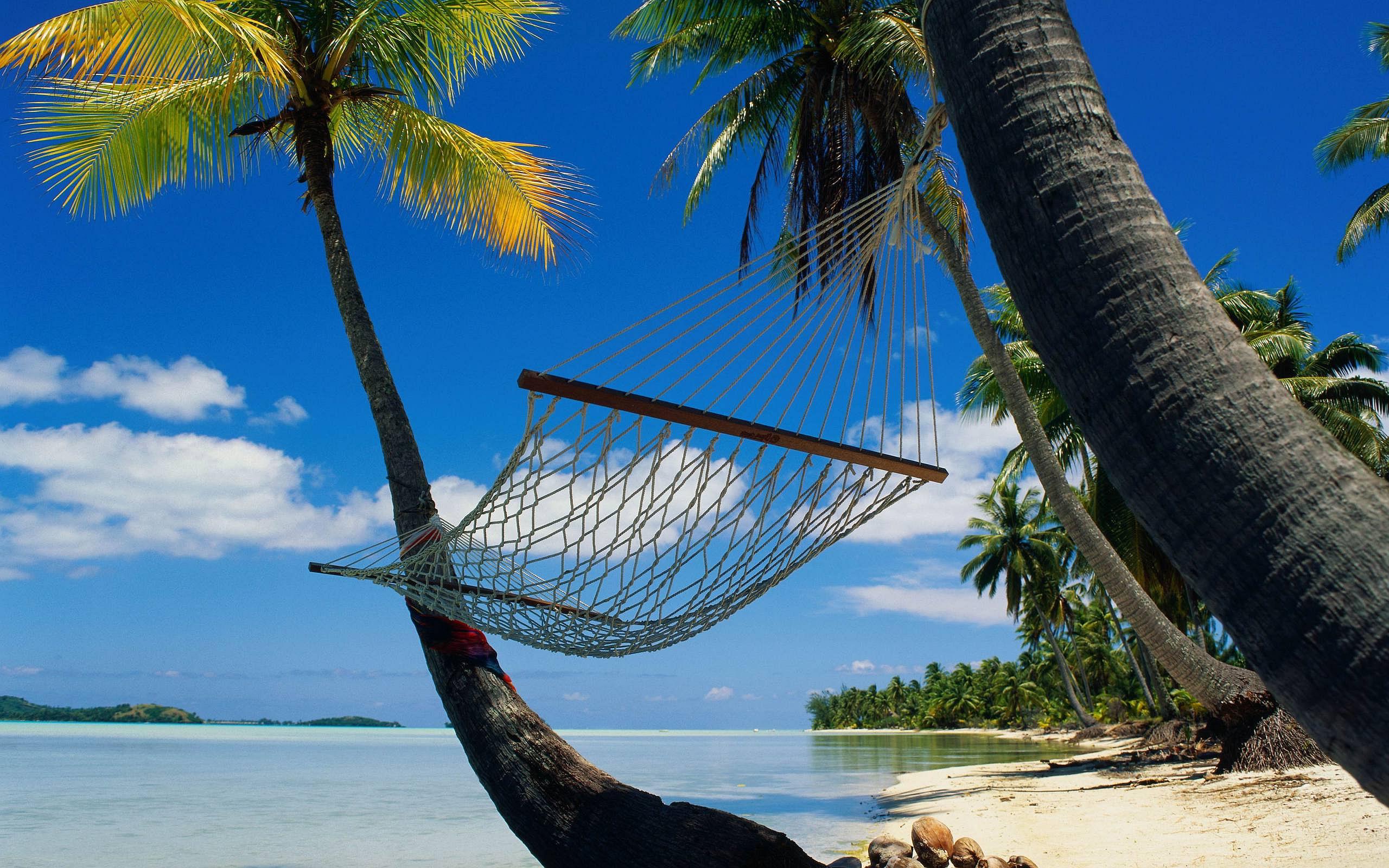 Tropical Ocean 3d Live Wallpaper Beach Palm Tree Hd Desktop Wallpapers 4k Hd
