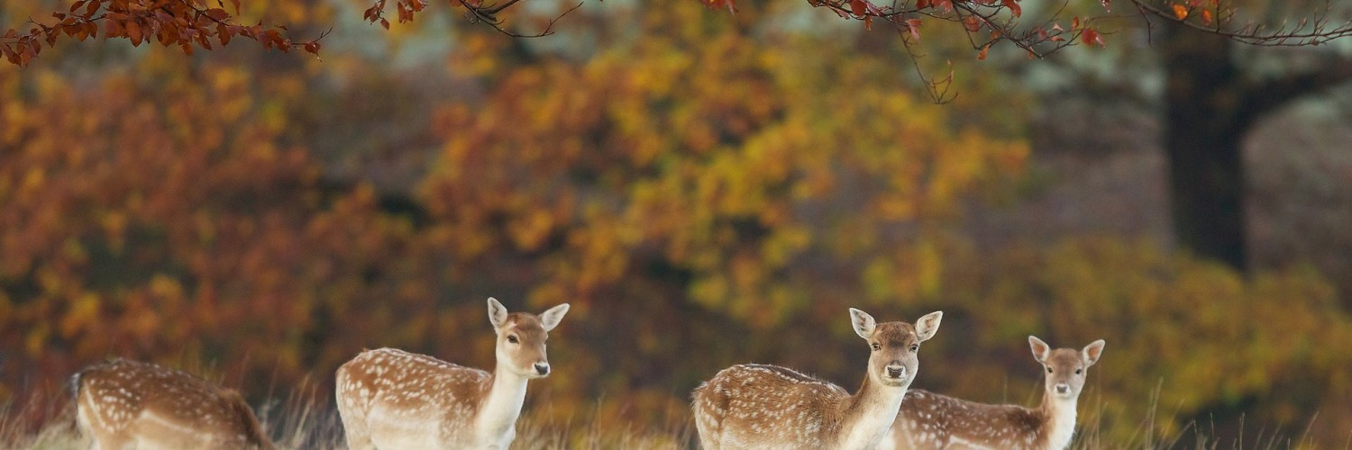 3d Deer Nature Live Wallpaper Deer Wallpaper Beautiful Autumn Hd Desktop Wallpapers