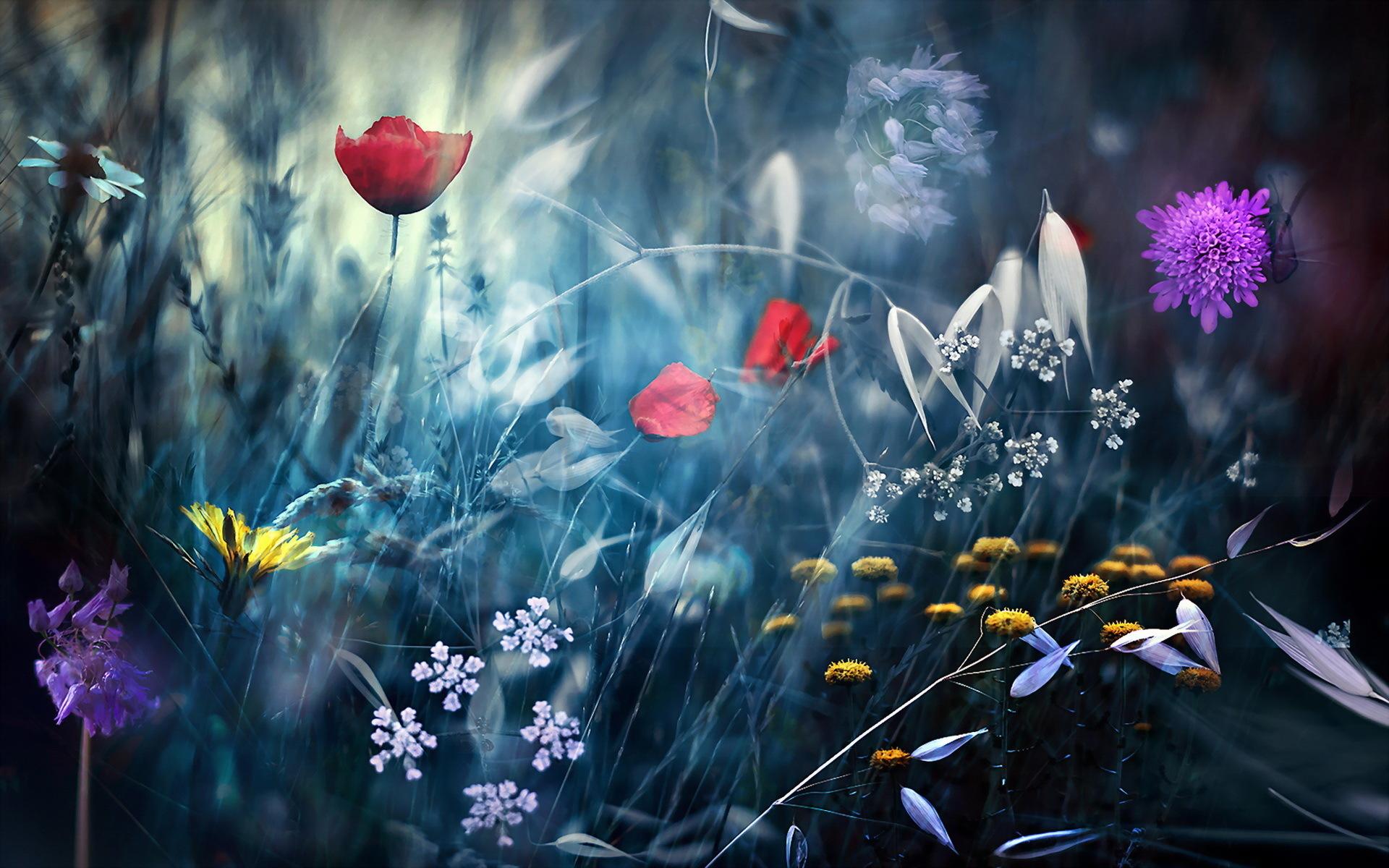 Niagara Falls Wallpaper Nature Different Flowers Hd Desktop Wallpapers 4k Hd