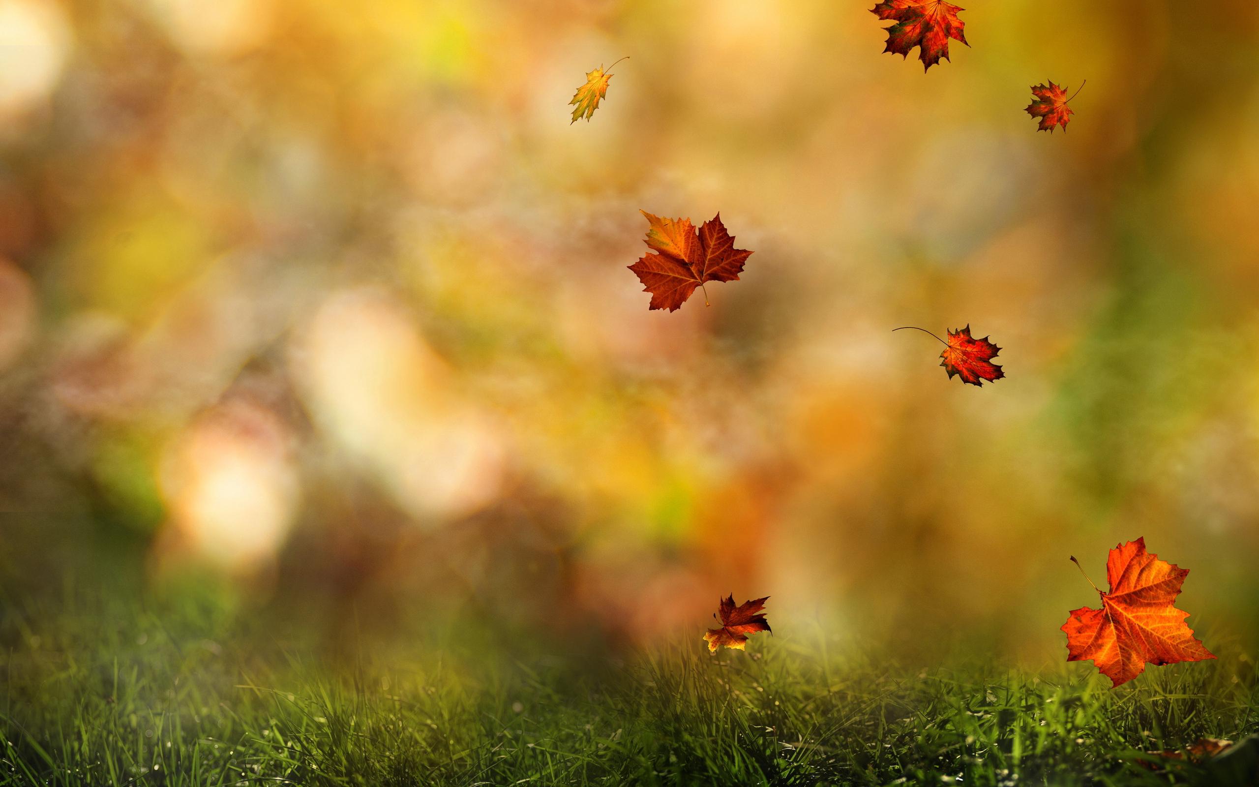 Free Falling Leaves Live Wallpaper Fall Wallpaper Forest Hd Desktop Wallpapers 4k Hd